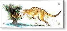 Ekaltadeta Prehistoric Rat-kangaroo Acrylic Print