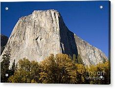 El Capitan In Yosemite National Park Acrylic Print by David Millenheft