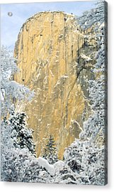 Acrylic Print featuring the photograph El Capitan With Snowy Trees by Judi Baker
