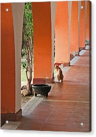 Acrylic Print featuring the photograph El Gato by Marcia Socolik