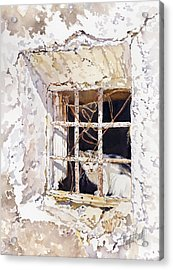 El Gato Acrylic Print by Margaret Merry