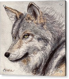 El Lobo Acrylic Print by Vikki Wicks