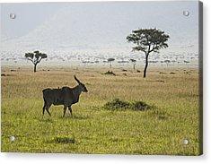 Acrylic Print featuring the photograph Eland In Masai Mara by Antonio Jorge Nunes