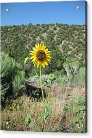 Elated Sunflower Acrylic Print