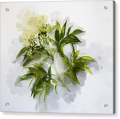 Acrylic Print featuring the photograph Elderberry  by Linde Townsend