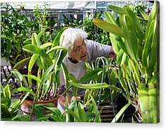 Elderly Woman Examining Plants Acrylic Print by Jim West