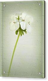 Eleanor Acrylic Print