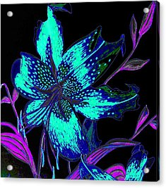 Electric Blue Stargazer Acrylic Print by Laura Wilson