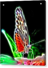 Electric Butterfly Acrylic Print