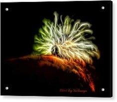 Electric Caterpillar Acrylic Print