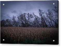 Electric Forest Acrylic Print by Jason Naudi Photography