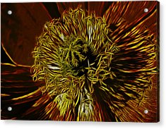 Electric Poppy Acrylic Print by Photographic Art by Russel Ray Photos