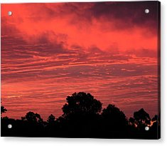 Electric Red Acrylic Print by Mark Blauhoefer