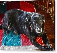 Electrostatic Dog And Blanket Acrylic Print by Barbara Griffin