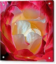Elegance Acrylic Print by Karen Harrison