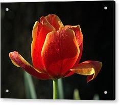 Elegance Of Spring Acrylic Print by Karen Wiles