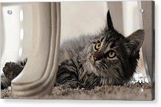Acrylic Print featuring the photograph Elegance by Silke Brubaker