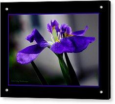 Elegant Iris With Black Border Acrylic Print