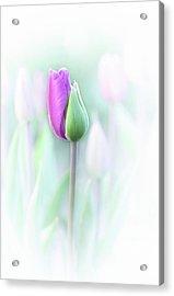 Elegant Acrylic Print by Lydia Jacobs