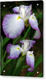 Acrylic Print featuring the photograph Elegant Purple Iris by Marie Hicks