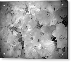Elegant Soft White Flowers Acrylic Print by Tina Wentworth