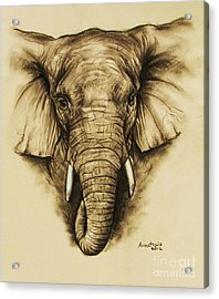 Elephant 2 Acrylic Print by Anastasis  Anastasi
