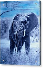 Elephant And Blue Sky Acrylic Print
