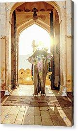 Elephant At Amber Palace Jaipur,india Acrylic Print by Mlenny