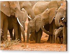 Elephant At The Hotspot Acrylic Print