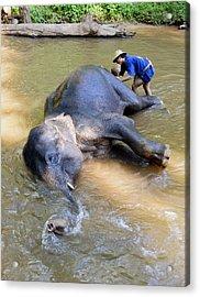 Elephant Bath Acrylic Print