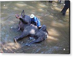 Elephant Baths - Maesa Elephant Camp - Chiang Mai Thailand - 011311 Acrylic Print by DC Photographer