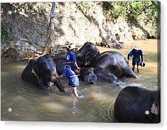 Elephant Baths - Maesa Elephant Camp - Chiang Mai Thailand - 011329 Acrylic Print by DC Photographer