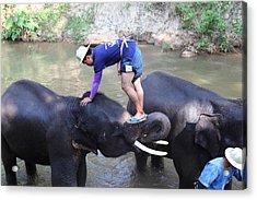 Elephant Baths - Maesa Elephant Camp - Chiang Mai Thailand - 011330 Acrylic Print