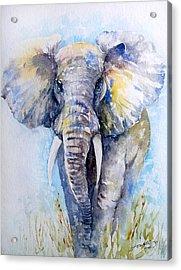 Elephant Blues Acrylic Print