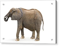 Acrylic Print featuring the photograph Elephant by Charles Beeler