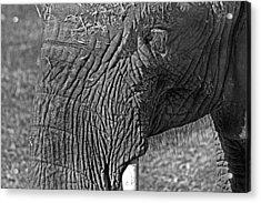 Elephant.. Dont Cry Acrylic Print