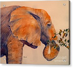 Elephant Eating Acrylic Print