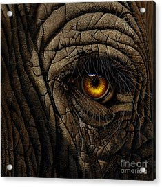 Elephant Eye Acrylic Print by Jurek Zamoyski