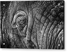 Elephant Eye Acrylic Print by Sebastian Musial
