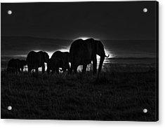 Elephant Family Acrylic Print by Aidan Moran