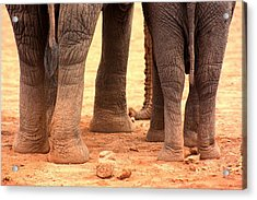 Acrylic Print featuring the photograph Elephant Family by Amanda Stadther