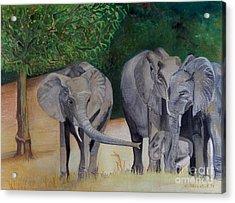 Elephant Family Gathering Acrylic Print
