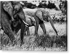 Elephant Family Acrylic Print by Vedran Vidak