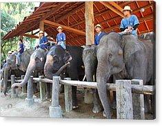 Elephant Greeting - Maesa Elephant Camp - Chiang Mai Thailand - 01134 Acrylic Print by DC Photographer
