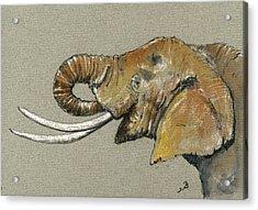 Elephant Head  Acrylic Print