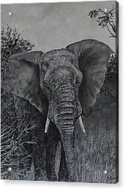 Elephant In African Preserve Acrylic Print