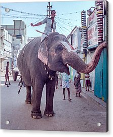 Elephant In The Street In India Acrylic Print