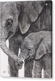 Elephant Love Acrylic Print by Michelle Wolff