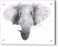 Elephant Acrylic Print by Lucy D