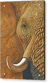 Elephant Matriarch Portrait Close Up Acrylic Print